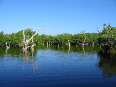 Mangroves at Palmar State Reserve in Yucatan. Photo by Ducks Unlimited de Mexico.